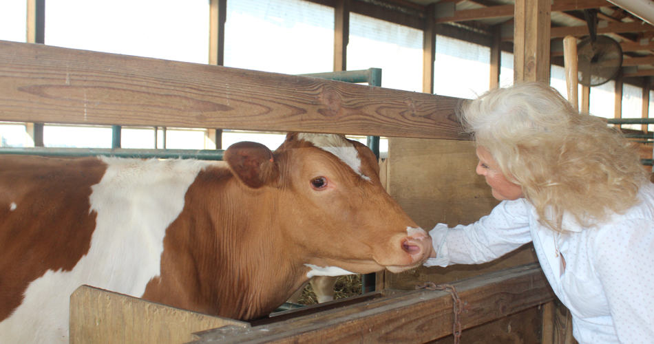 Bonnnie petting a heifer