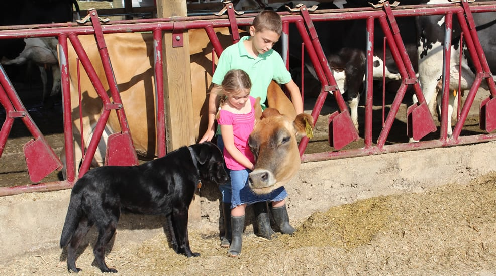 Hupp kids petting a cow as their dog stands next to them