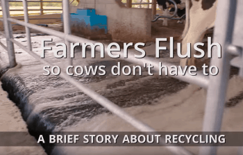 Farmers Flush So Cows Don't Have To