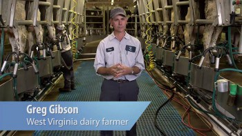 Know Your Dairy: Milking Cows
