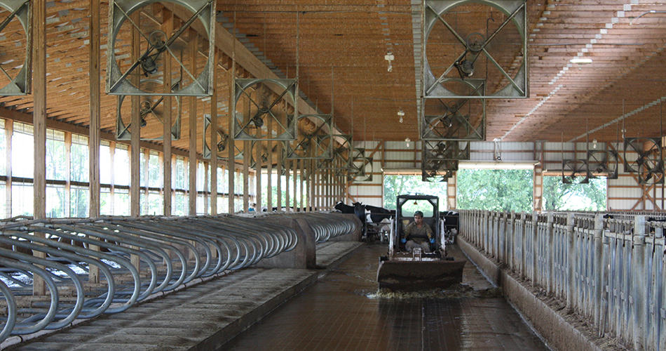 cleaning barn