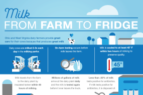 Milk: From Farm to Fridge