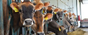 Economic Impact of Ohio's Dairy Community