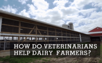 How Do Veterinarians Help Dairy Farmers?