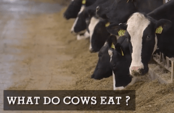 Cow Care with Dr. Fred Gingrich