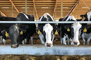 About Dairy Farming