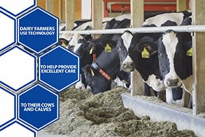 Modern Technology: Focusing on Cow Comfort