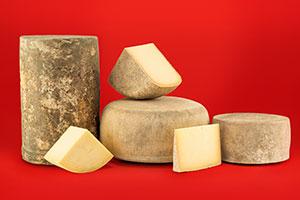 Urban Stead Cheese