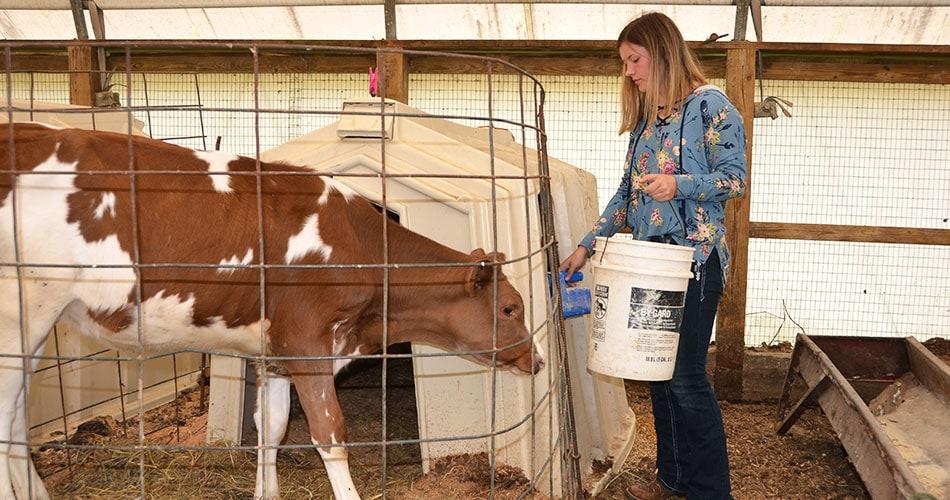 Riley Shockey feeding calves