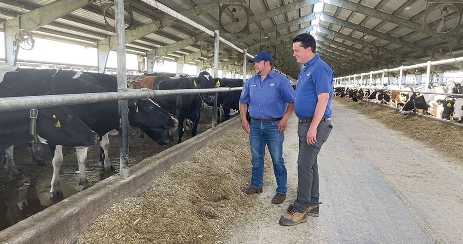 Scott and Salvador checking on the cows