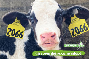 Adopt a Cow Program